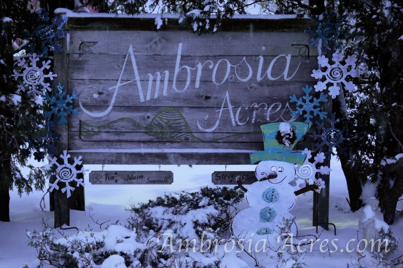 Ambrosia Acres Sign - Winter-1.jpg