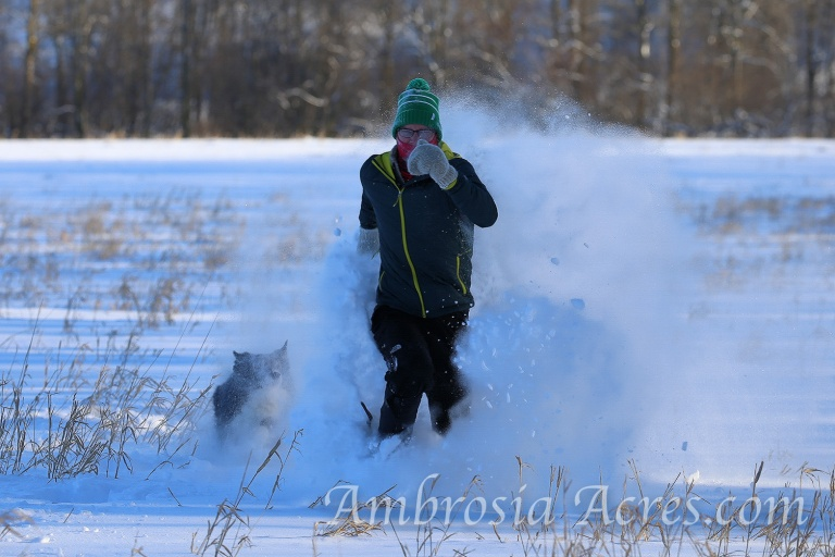 family_dogs_winter-9656-edit-1