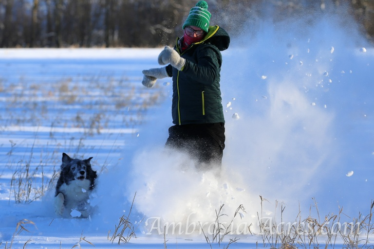 family_dogs_winter-9660-edit-3