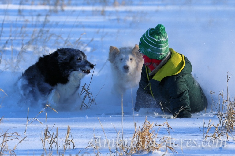 family_dogs_winter-9664-edit-4