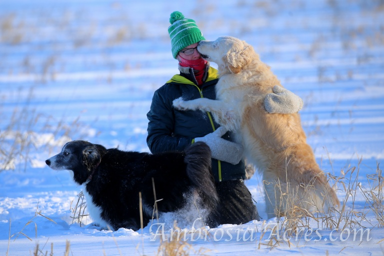 family_dogs_winter-9691-edit-6